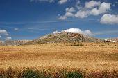 Trigo campo y Castillo, Teba, Andalucía, España.