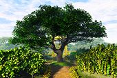Garden of Herbs and Summer Cherry Tree 3D render