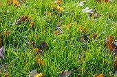 Autumn Grass Background