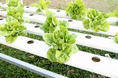 Many Kinds Of Hydroponic System