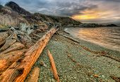 Full Tree Log Washed Up Along Shore At Sunrise