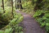 Trail To Punch Bowl Falls Oregon Forest Northwest