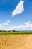 foto of youg  - Italy Tuscany region Orcia Valley - JPG