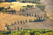 Cypress Tree Scenic Road In Pienza Near Siena, Tuscany, Italy.