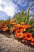 Tiny Orange Flowers
