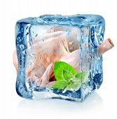 Chicken in ice cube