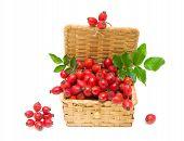 Ripe Berries Of Wild Rose Close-up