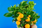Oranges And Green Leaf