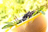 Elder Berries In A Bowl.
