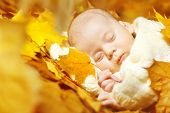 pic of little angel  - Autumn newborn baby sleeping in maple leaves - JPG