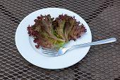 Lettuce Leaf on a Plate