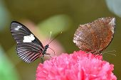 Colourful Butterfly on the Flower