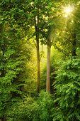 Golden Sun Shining Through Fresh Foliage