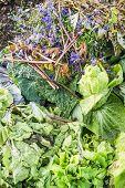 Autumnal Garden Waste