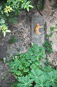 Topview Of A Cat Sleeping In Backyard