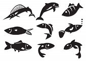 Vector Illustration Of Different Fish