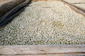 Drying coffee beans after the wet processing