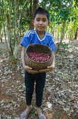 boy is smiling for photo with coffee berries