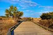 stock photo of board-walk  - Palmetto trees and blue sky along the boardwalk at Myrtle Beach State Park - JPG