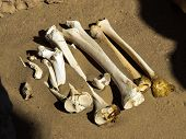 Bones in the sand