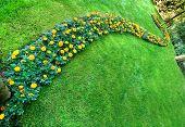 Pretty Manicured Flower Garden With Marygolds
