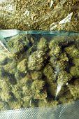 Weed Pot Cannabis Marijuana