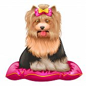 Little Yorkshire Terrier On Pillow