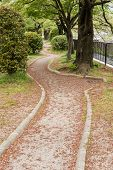 The trail covered with pink flower petals of sakura in Kyoto