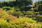 Prospects are trees in the scenery of Ginkakuji Temple, Kyoto.