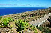 Agave In Fogo, Cabo Verde