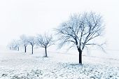 Trees on a snowy winter day