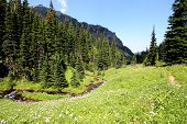 Alpine Meadow with Stream