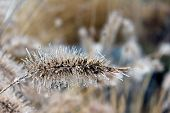 Icy Grass Seed