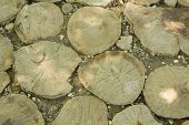 Tree Trunk Slices In The Soil
