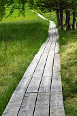 Wooden Boardwalk Through Green Countryside