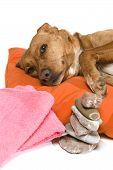 Zen Moment für Hund