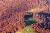 orange forest on autumn season