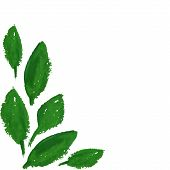 Hand Drawn Sketched Green Leaves Corner