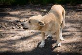 Little Dog Alone