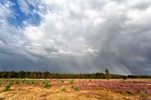 Stormy Sky And Rainbow Over Meadow With Heather