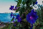Beautiful Garden With Bellflowers