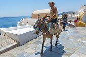 Donkey Transport In Oia, Santorini, Greece