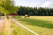 Horse And Foal On The Farm