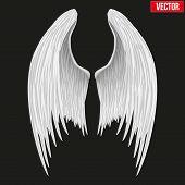 White folded angel wings. Vector.