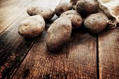 Fresh harvested potatoes spilling out of a burlap bag, on a rough wooden palette. Dirt or soil still