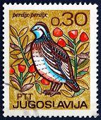Postage Stamp Yugoslavia 1967 Partridge, Bird