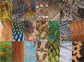 reptile skin collection