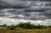 Everglades Landscape, clouds