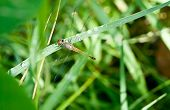 Dragonfly On A Background Of Green Grass.