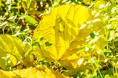 Yellow Autumn Leaf In The Green Grass